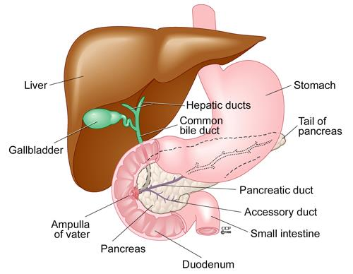 Dumping Syndrome Cleveland Clinic