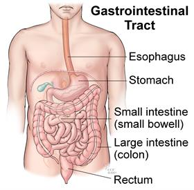 Gastriointestinal Tract