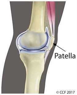Image of the knee and the patella