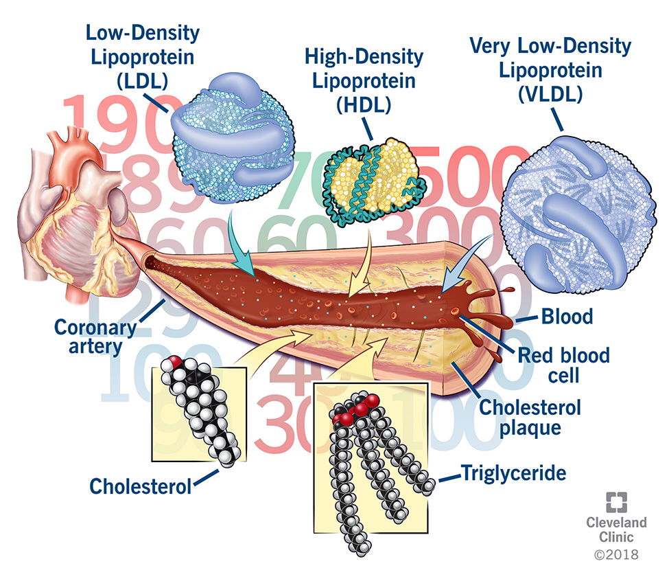 cholesterol components in the blood