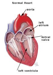 Anatomy of the heart   Cleveland Clinic