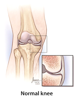 normal knee | Cleveland Clinic