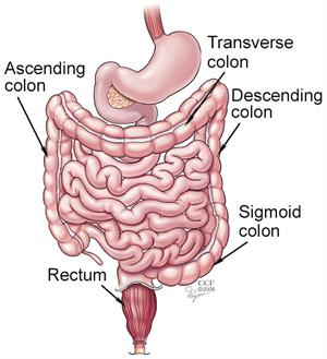 Colorectal Colon Cancer Symptoms Diagnosis Treatments