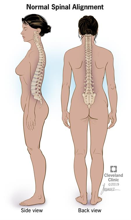 Normal Spinal Alignment side view and back view.