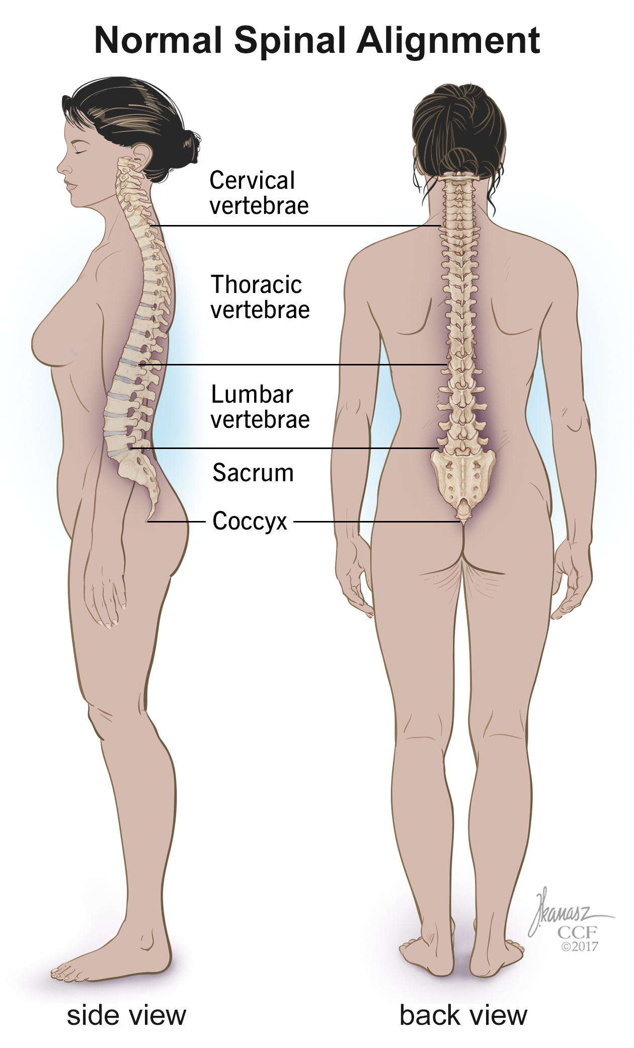 Spine Structure Function Parts Segments Spine Problems Spine Health